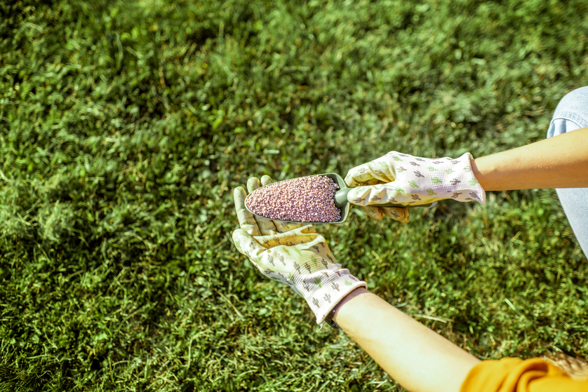 What Fertilizer To Use When Planting Grass Seed