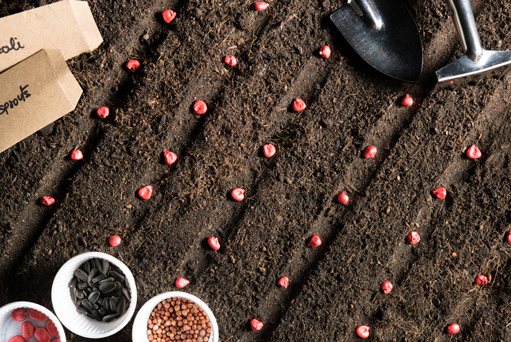 top view image of planting seeds in soil