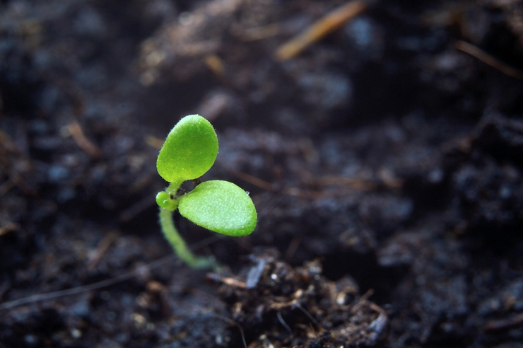 Start Sowing Seeds